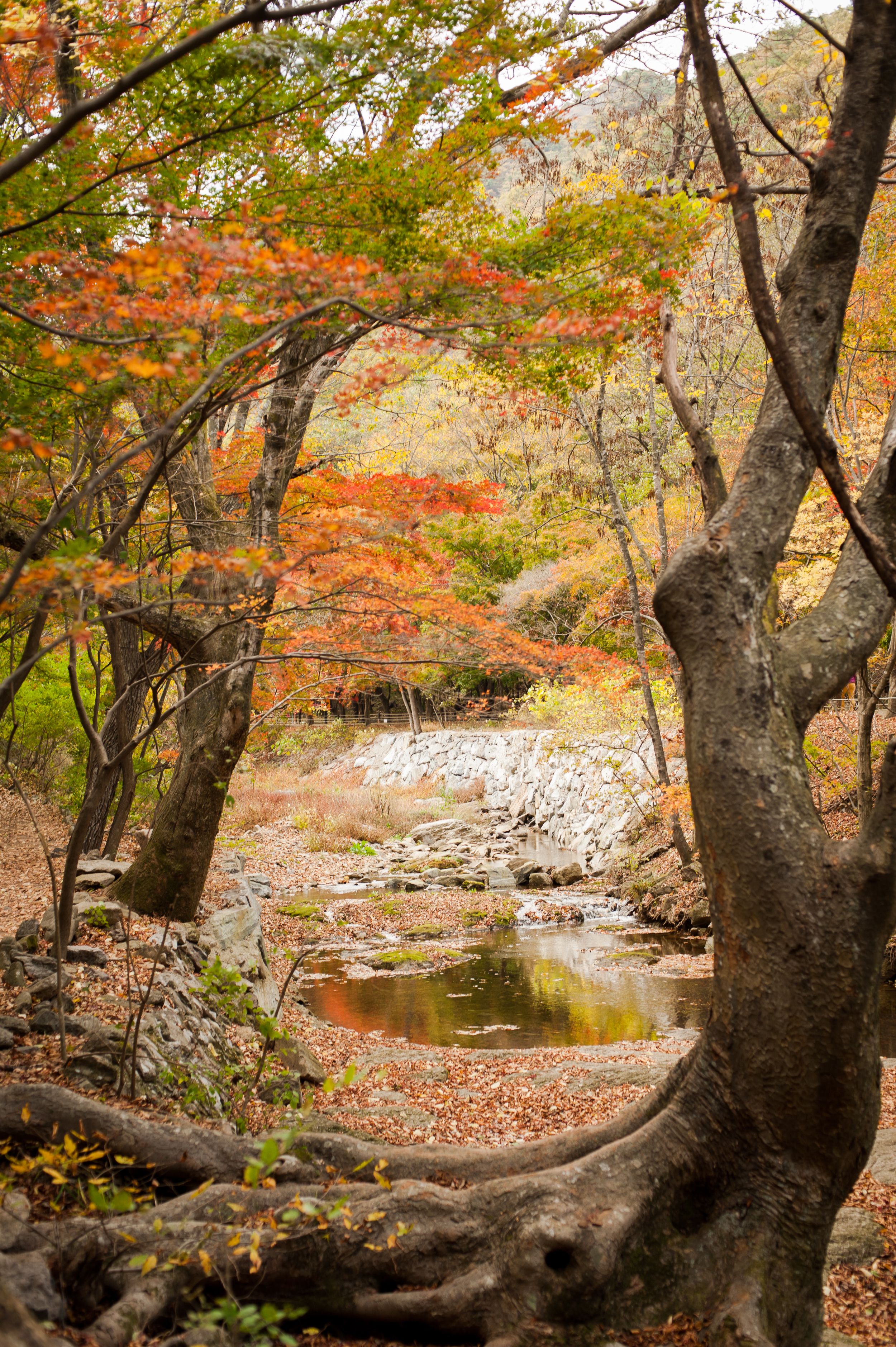 Naejangsan Autumn Fall Leaves Colours South Korea CityGirlSearching Photography (21 of 72).jpg
