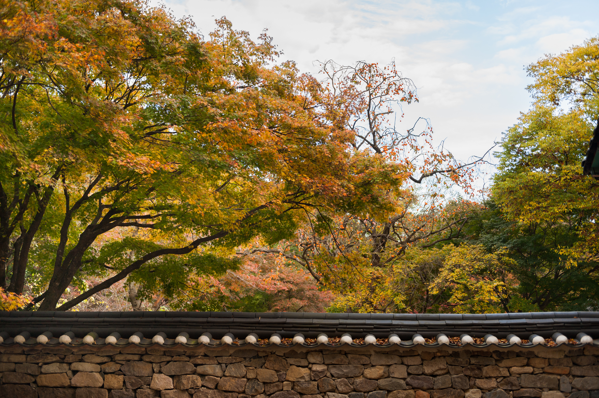 Naejangsan Autumn Fall Leaves Colours South Korea CityGirlSearching Photography (42 of 72).jpg