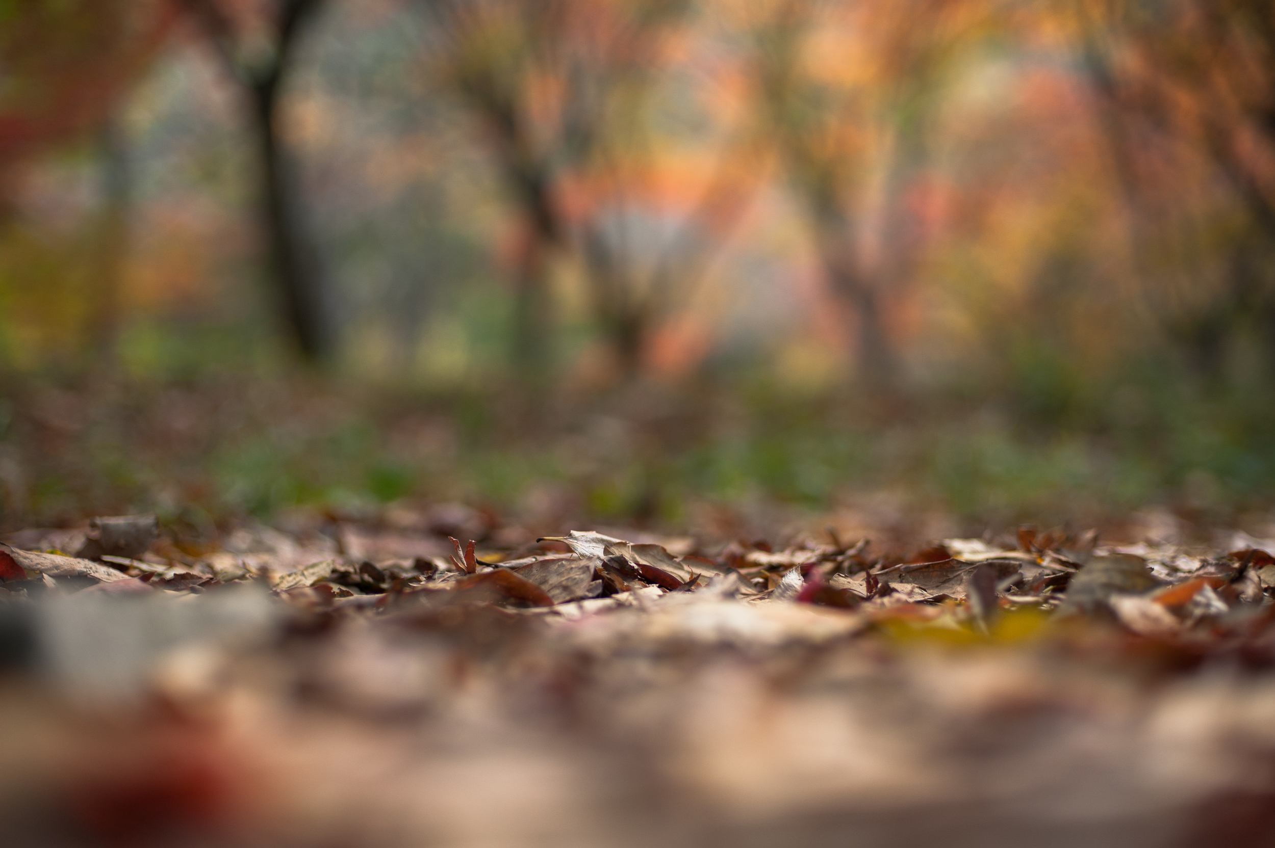 Naejangsan Autumn Fall Leaves Colours South Korea CityGirlSearching Photography (54 of 72).jpg
