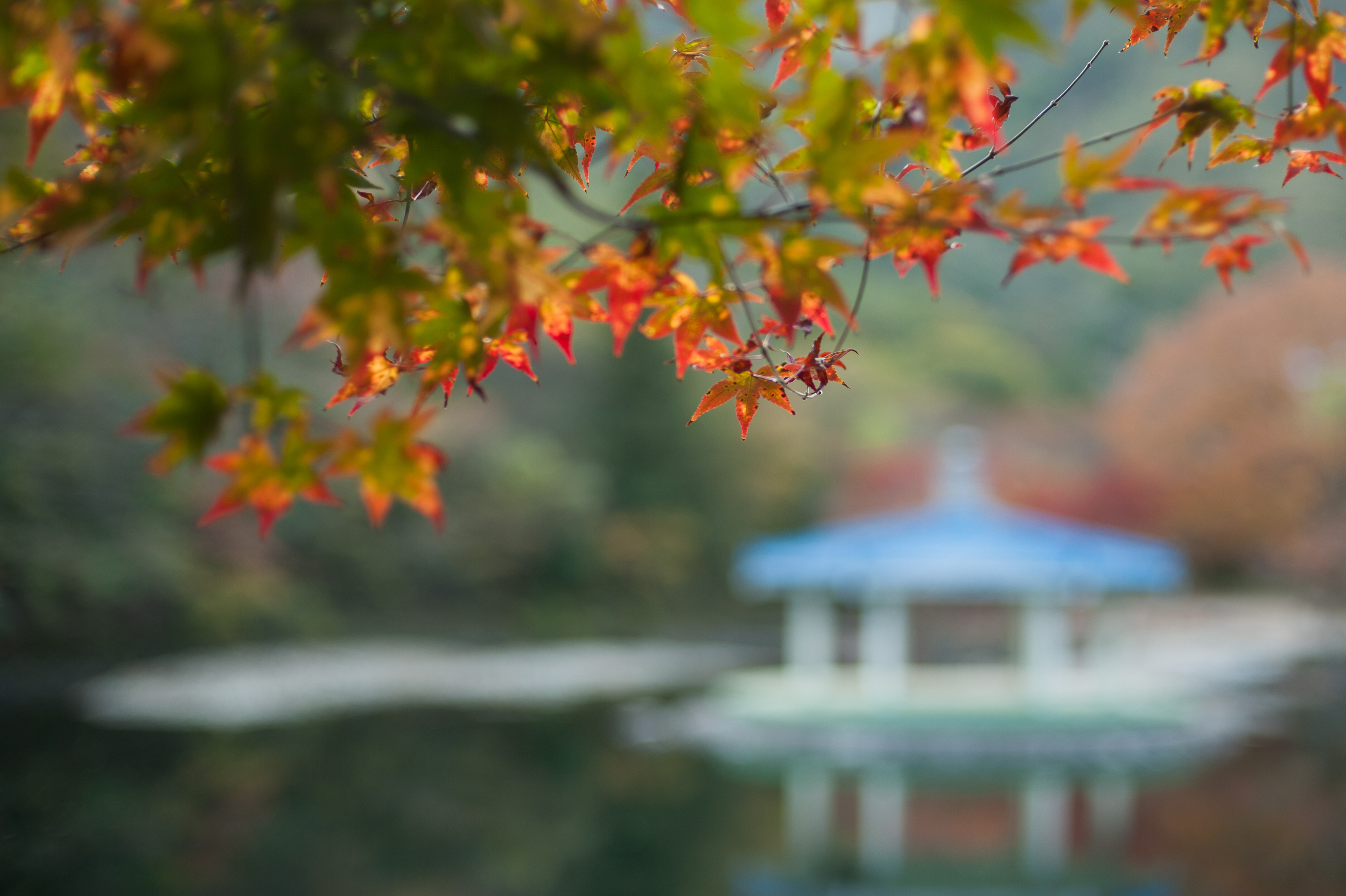 Naejangsan Autumn Fall Leaves Colours South Korea CityGirlSearching Photography (58 of 72).jpg