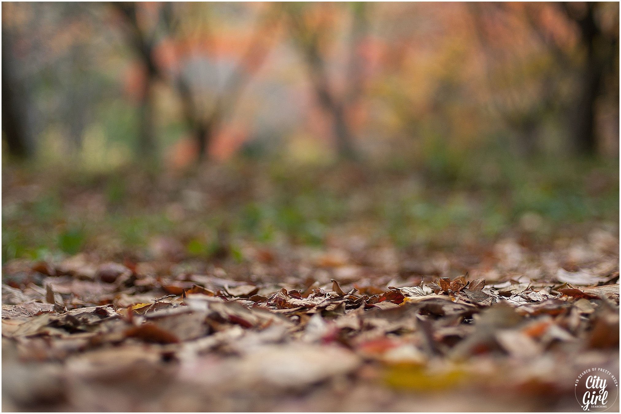 Naejangsan Autumn Fall Leaves Colours South Korea CityGirlSearching Photography (53 of 72).jpg