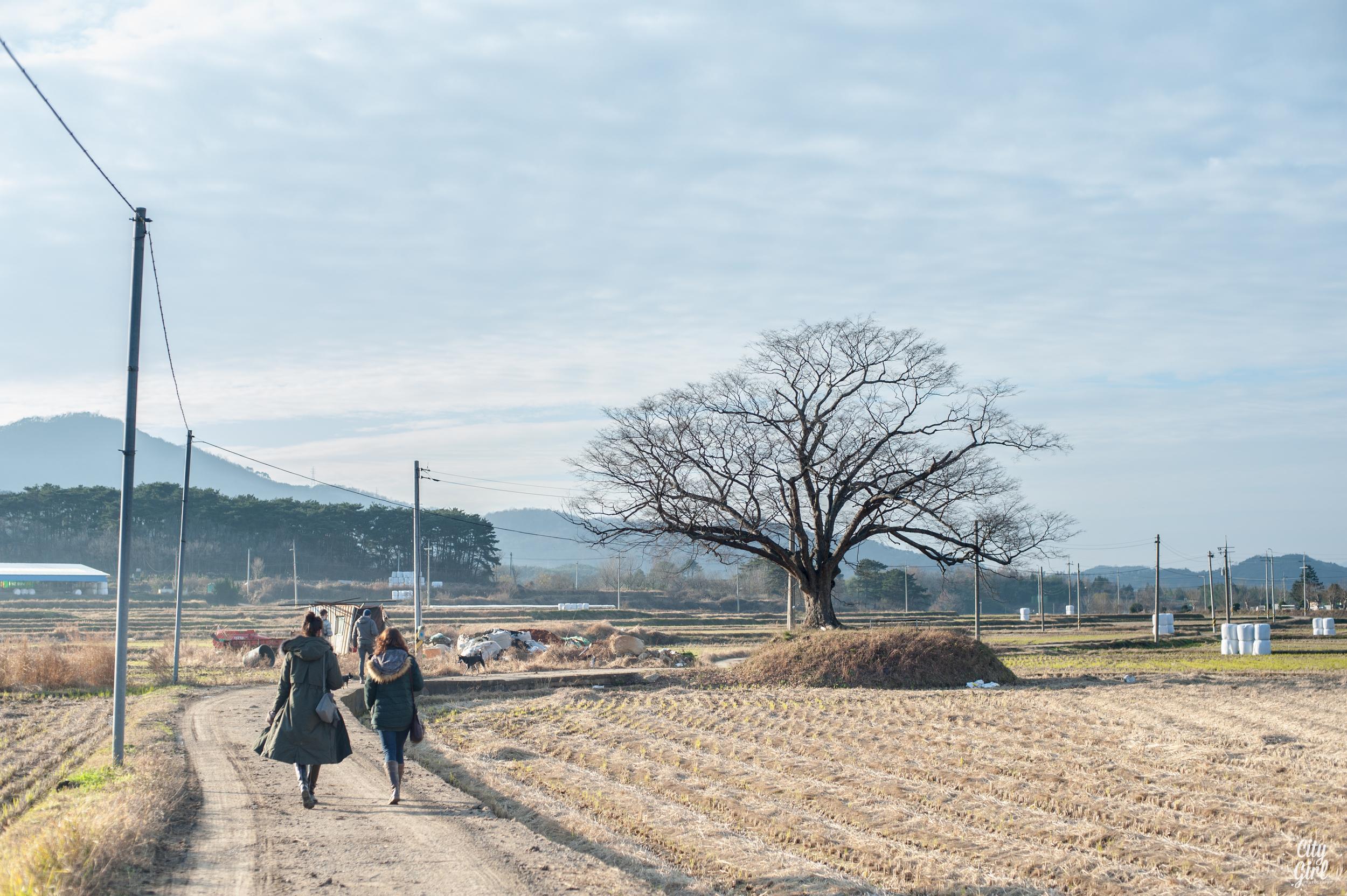 Photographer in Korea City Girl Searching Damyang Gwangju Korea-20.jpg