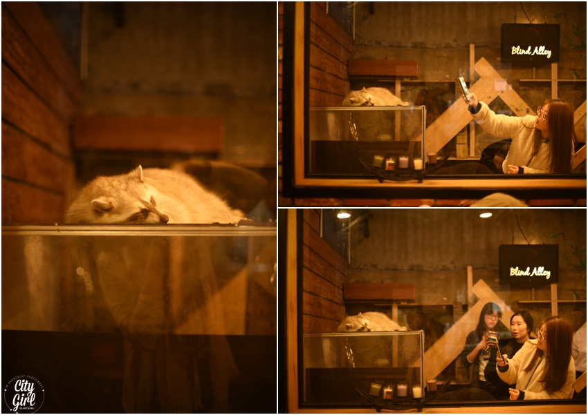 Blind Alley Racoon Cafe Seoul Things to do in Seoul Korea (4 of 43).jpg