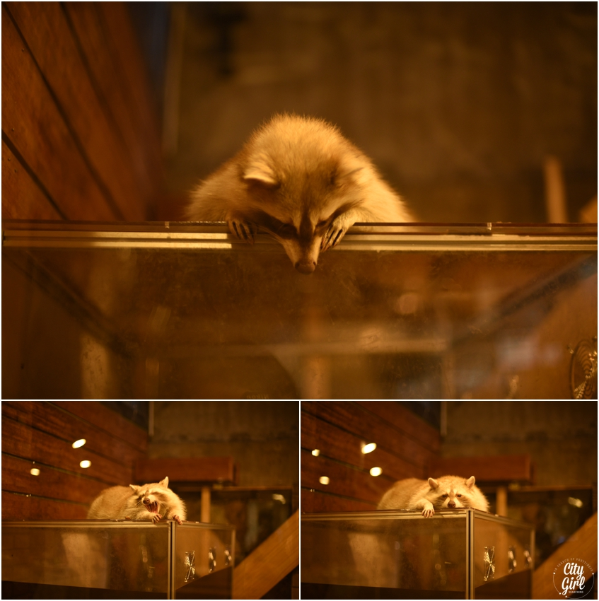Blind Alley Racoon Cafe Seoul Things to do in Seoul Korea (7 of 43).jpg