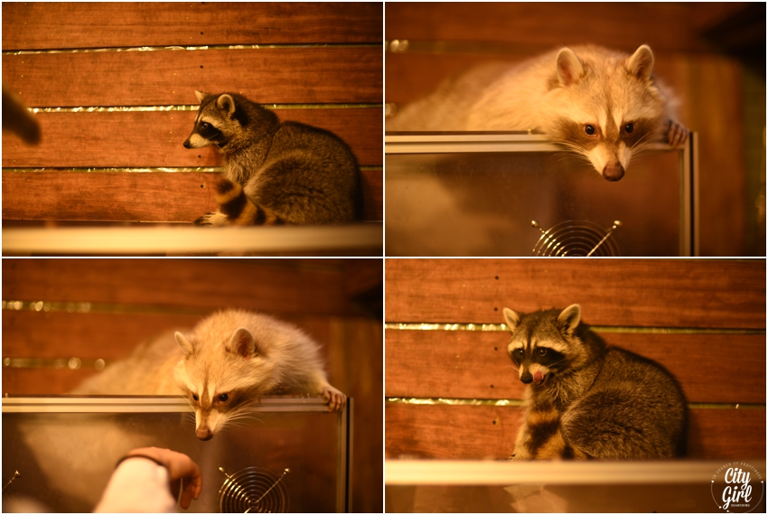 Blind Alley Racoon Cafe Seoul Things to do in Seoul Korea (17 of 43).jpg