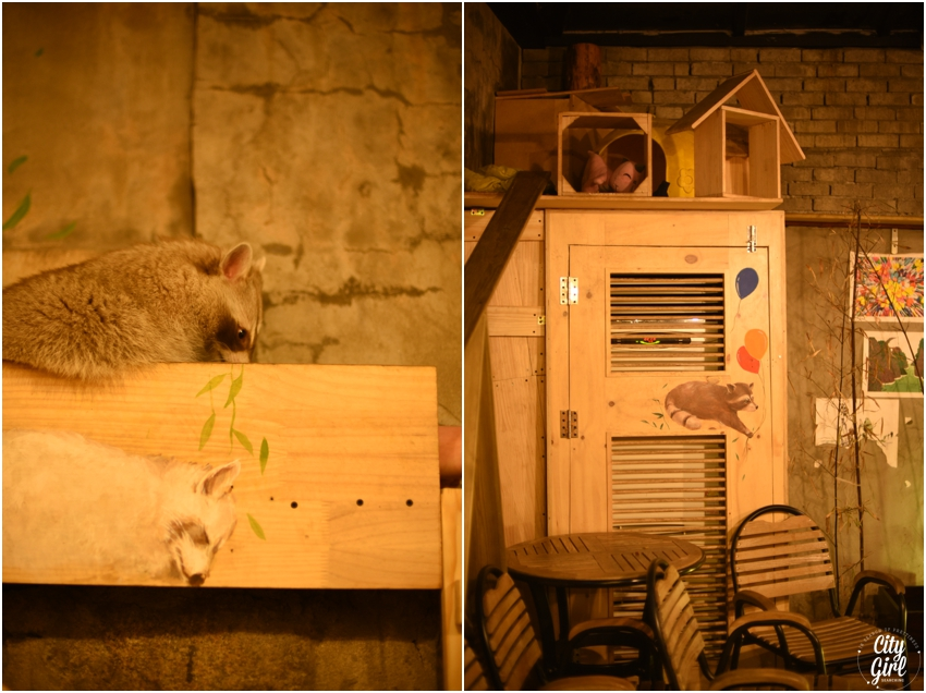 Blind Alley Racoon Cafe Seoul Things to do in Seoul Korea (33 of 43).jpg