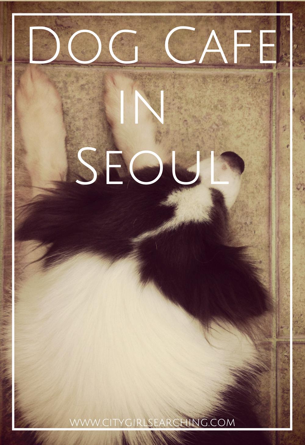 Dog cafe in seoul South Korea