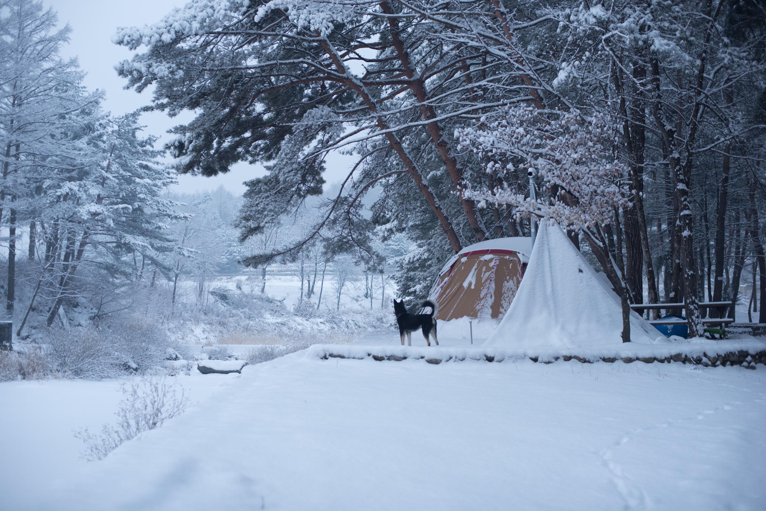 ArtInIslandPyeongChangDogFriendly Wooden Cabin Korea (100 of 258).JPG