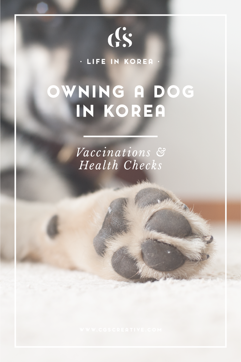 Owning A Dog In Korea Health Check Ups Vaccinations