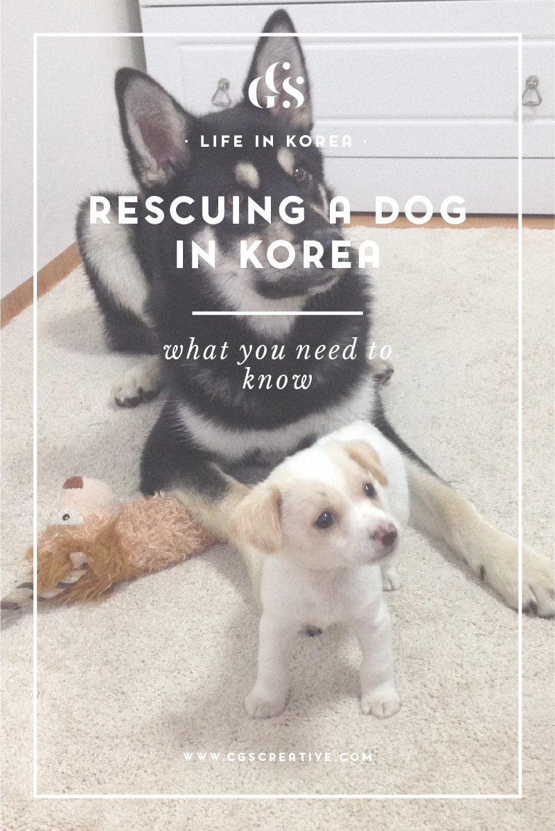 RescuePuppyInSouthKorea what you need to know