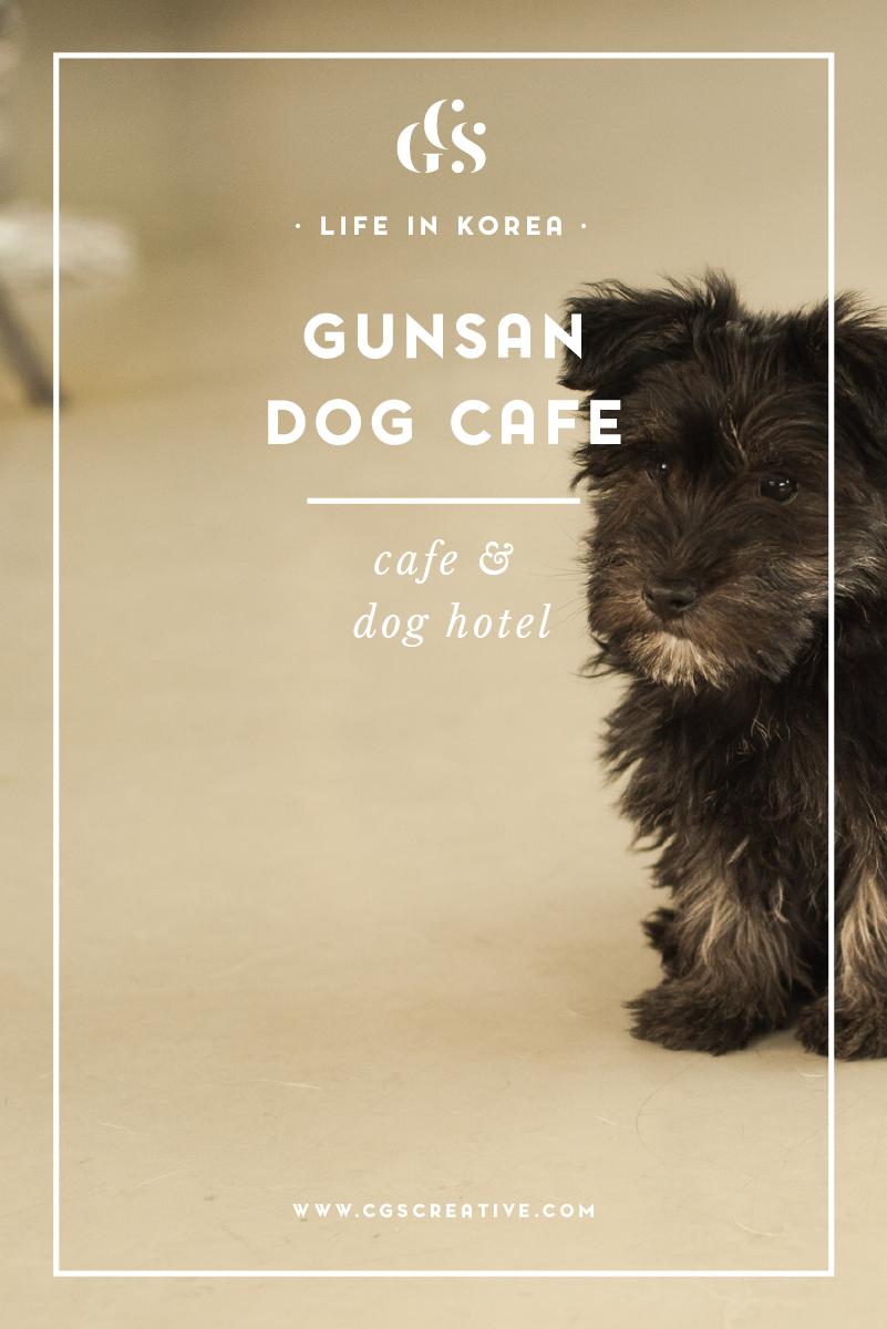 DogCafeDogHotelGunsanSouthKorea