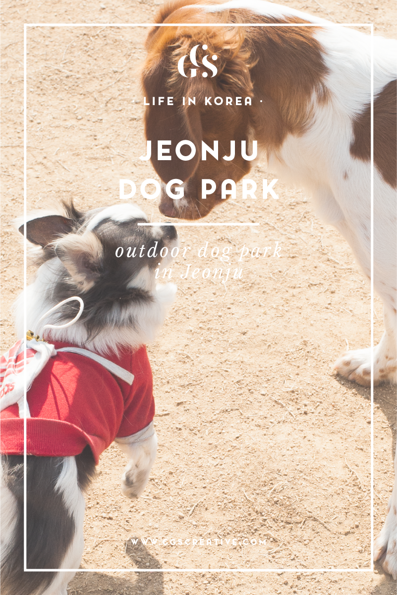 outdoor dog park in jeonju korea-01.png
