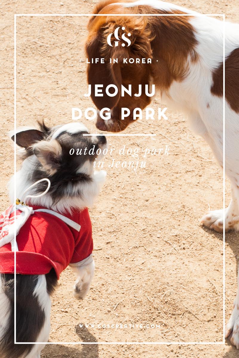 outdoor dog park in jeonju korea-01.png