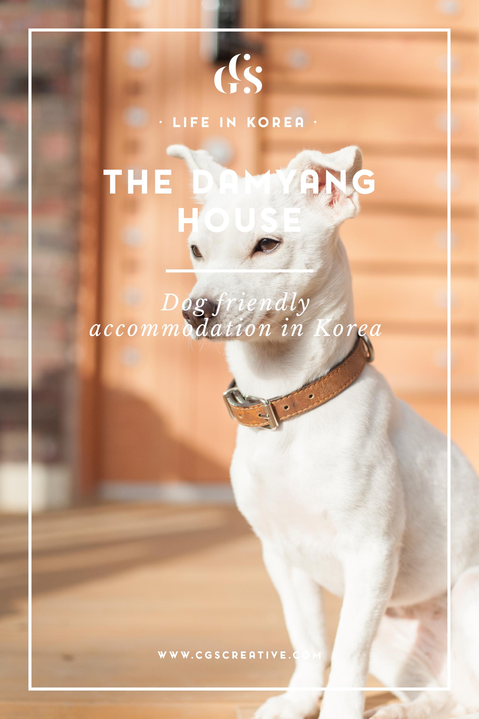 Damyang House dog friendly accommodation in Gwanju South Korea
