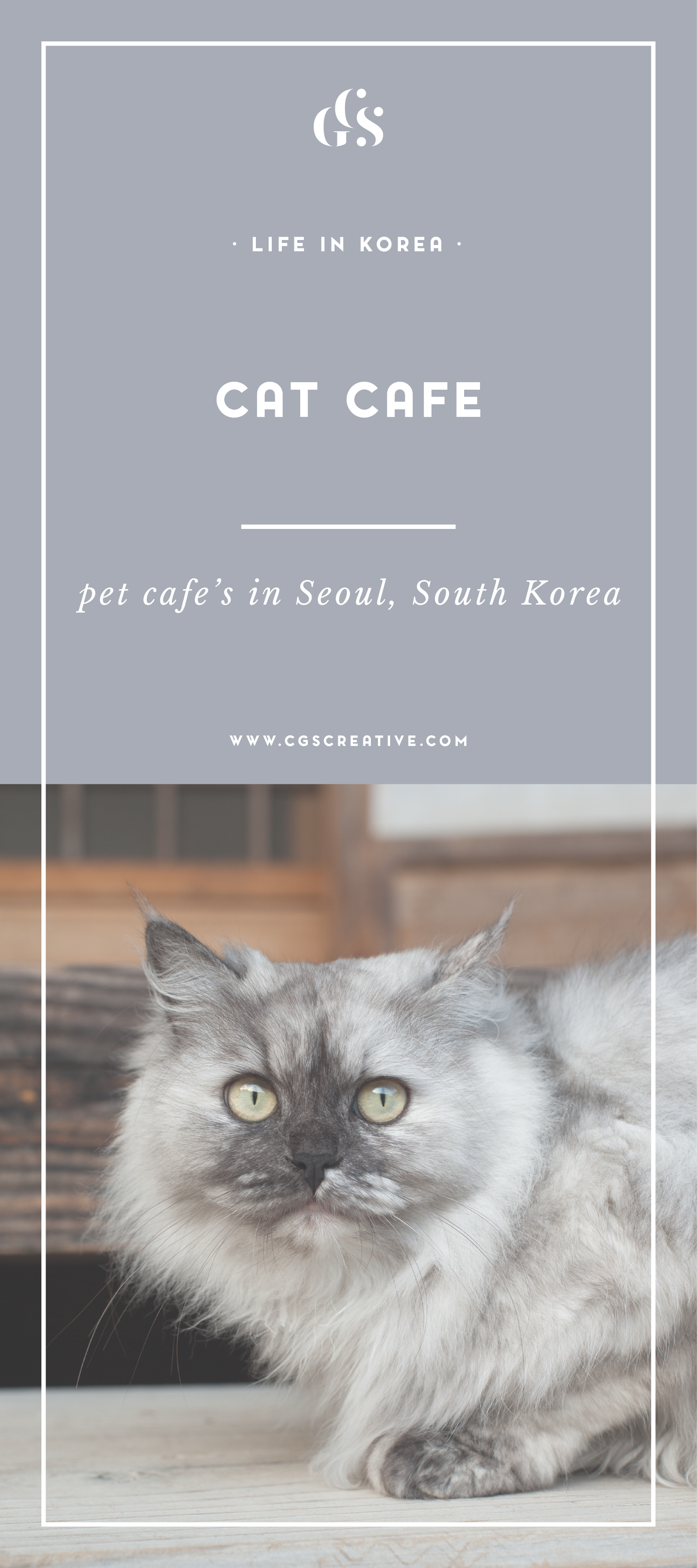 Cat Cafe in Seoul South Korea by CityGirlSearching Blog_Artboard 3.png