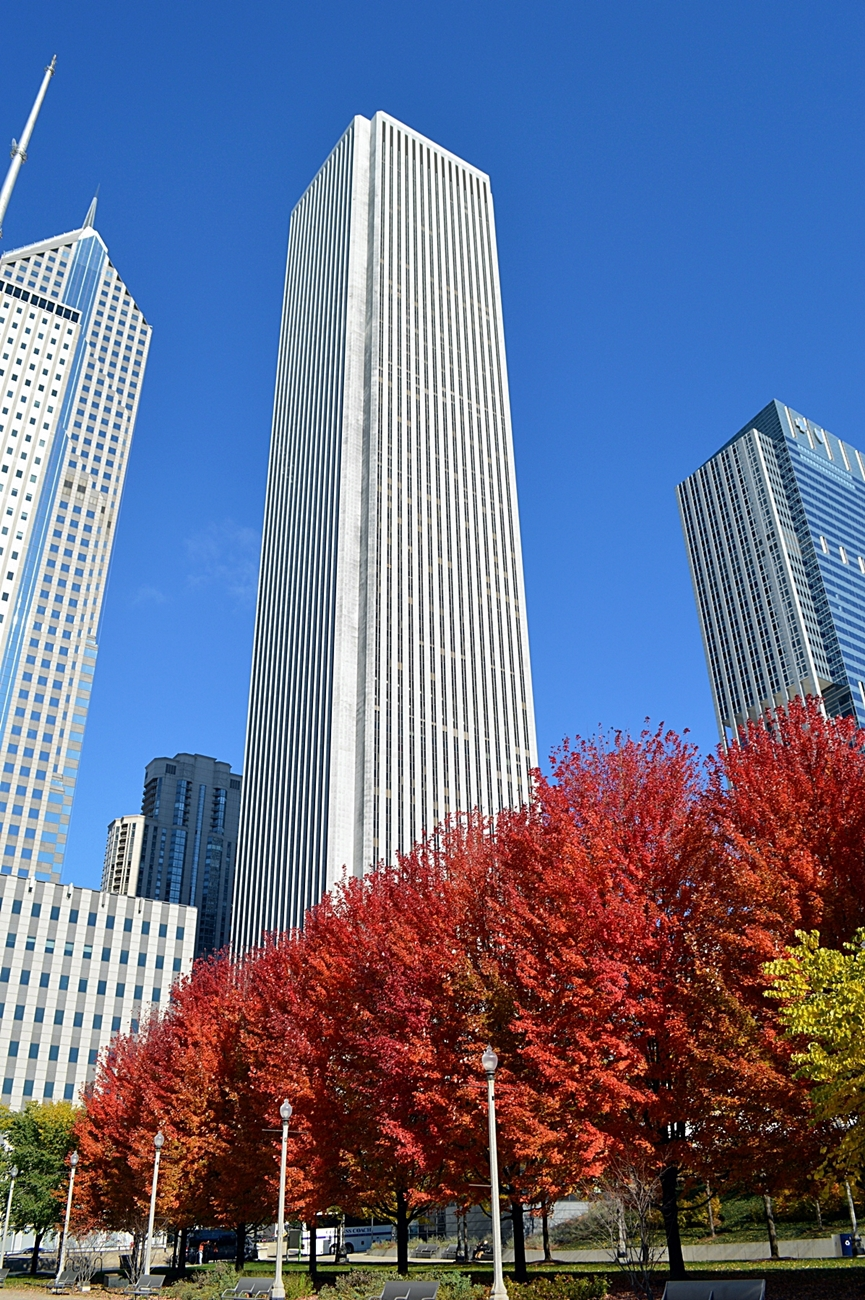 Fall Foliage in Millennium Park