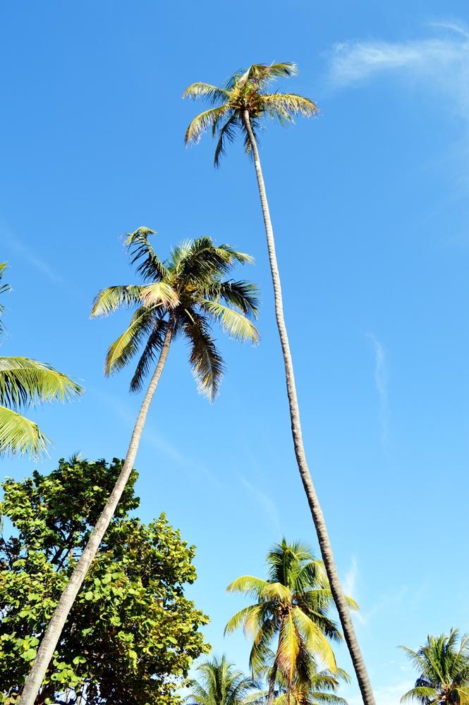 Miami Beach - www.reportista.com