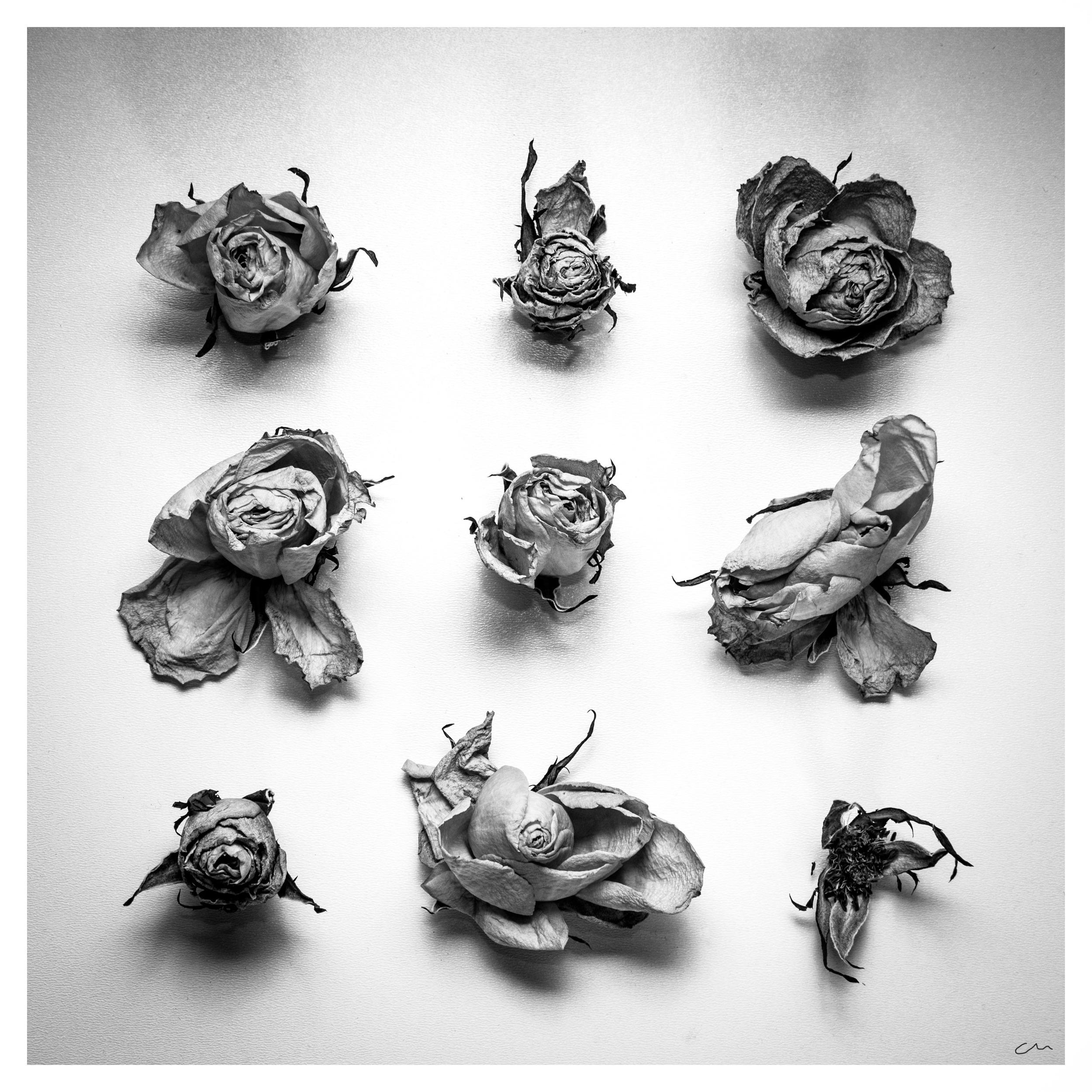 lots of roses.jpg