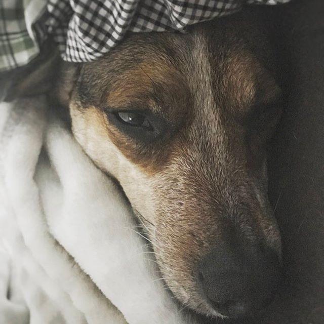 More sleep, please #dogsofinsta #puppy #cuddlebuddy #goodmorning