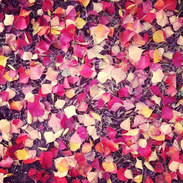 2011-11-10_1320952581.jpg