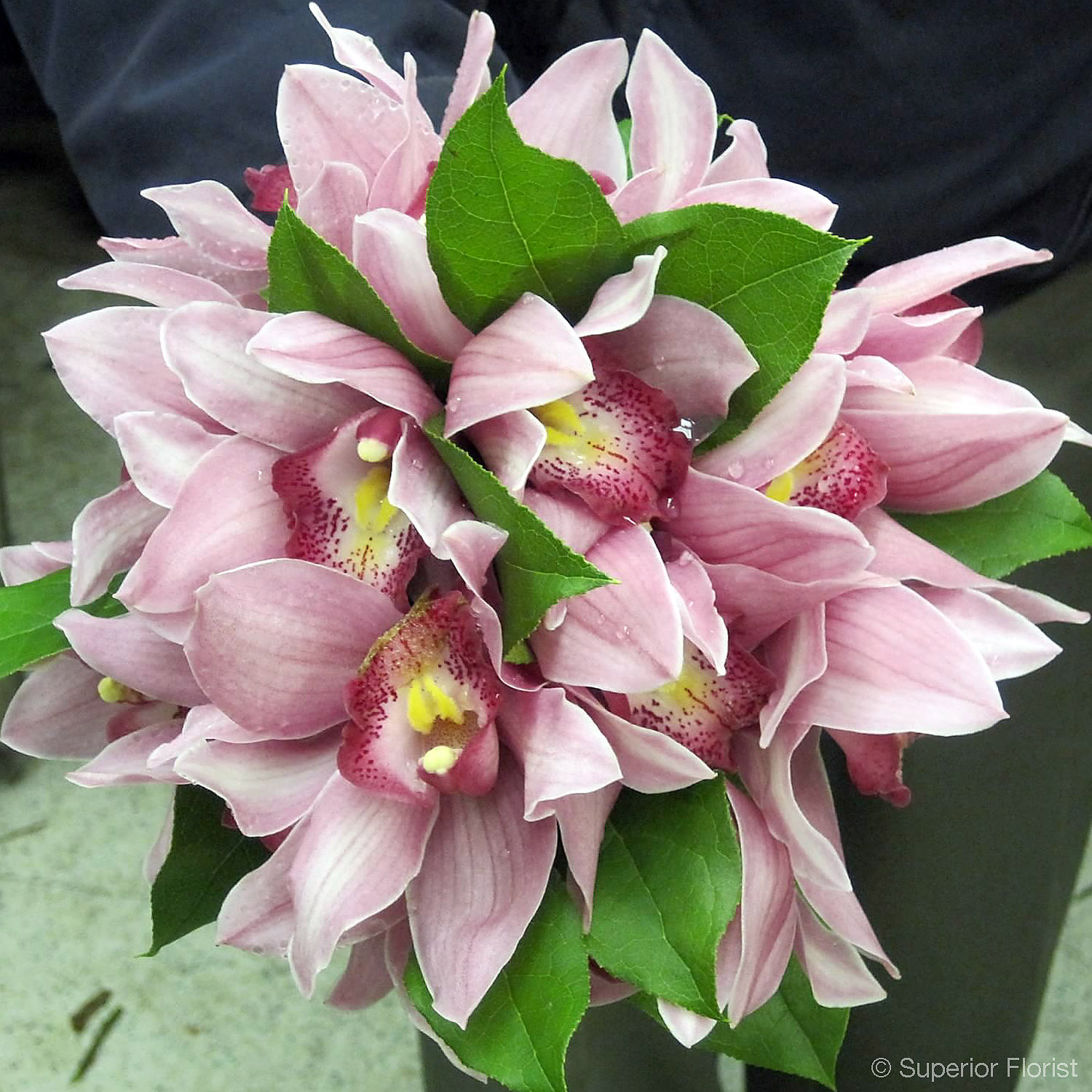 Superior Florist – Weddings – Personal Flowers: Hand tied bouquet of dark pink Cymbidium orchids and salal greens.