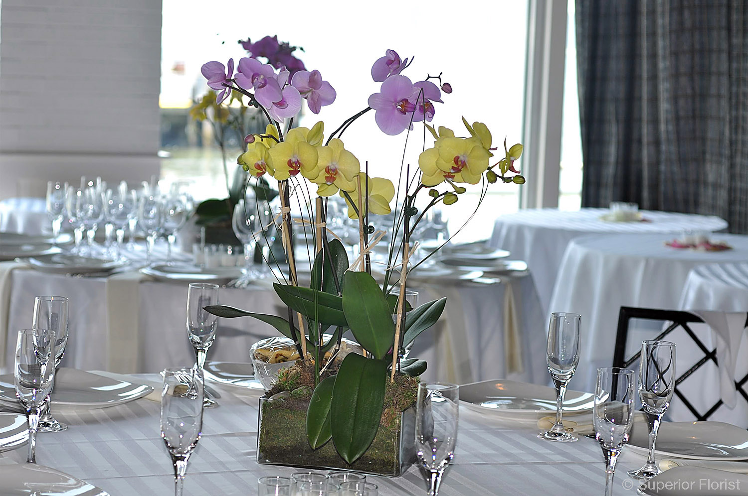 Superior Florist – Centerpieces:  Philinopsis plants in square glass tray.