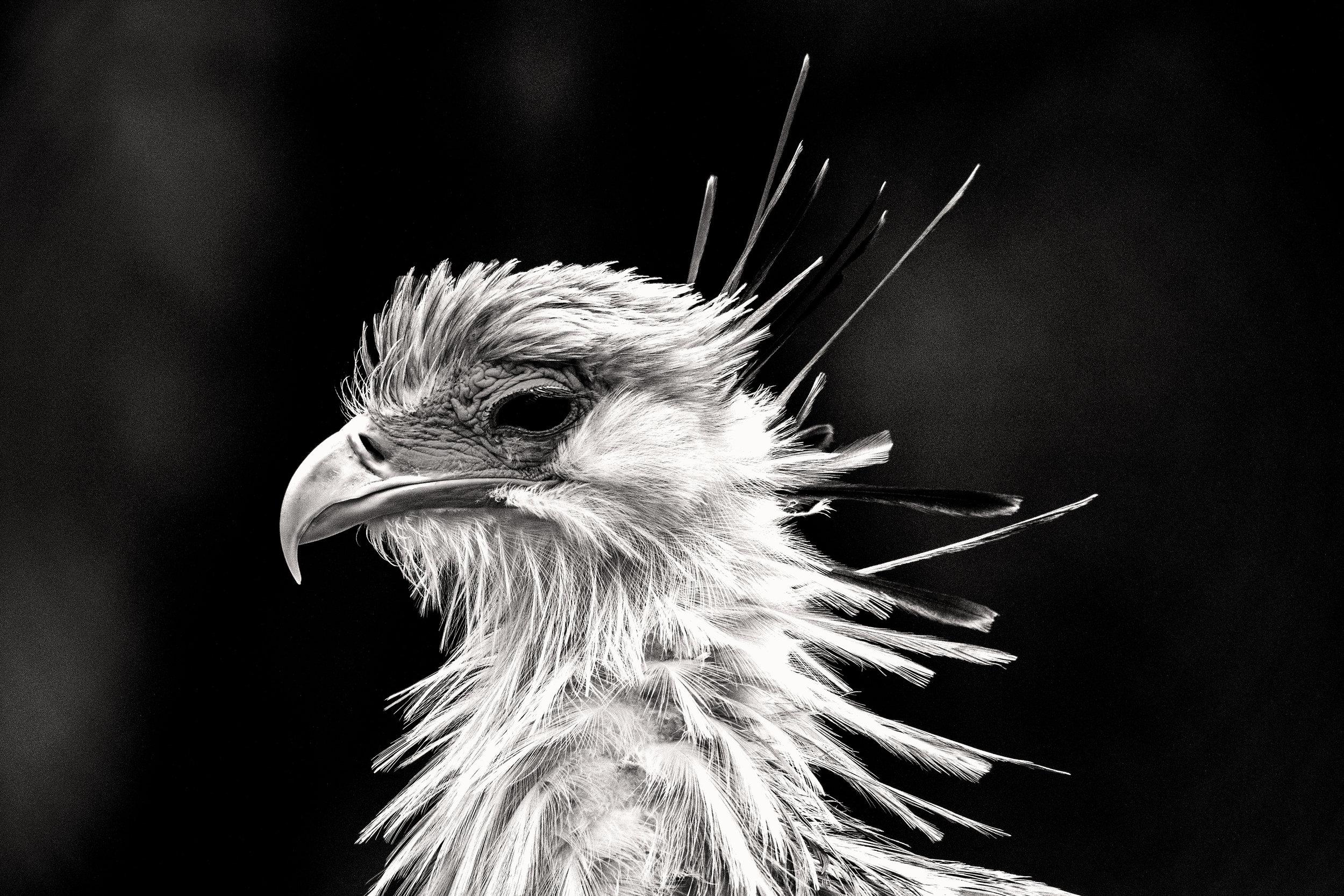 secratarybird.jpg