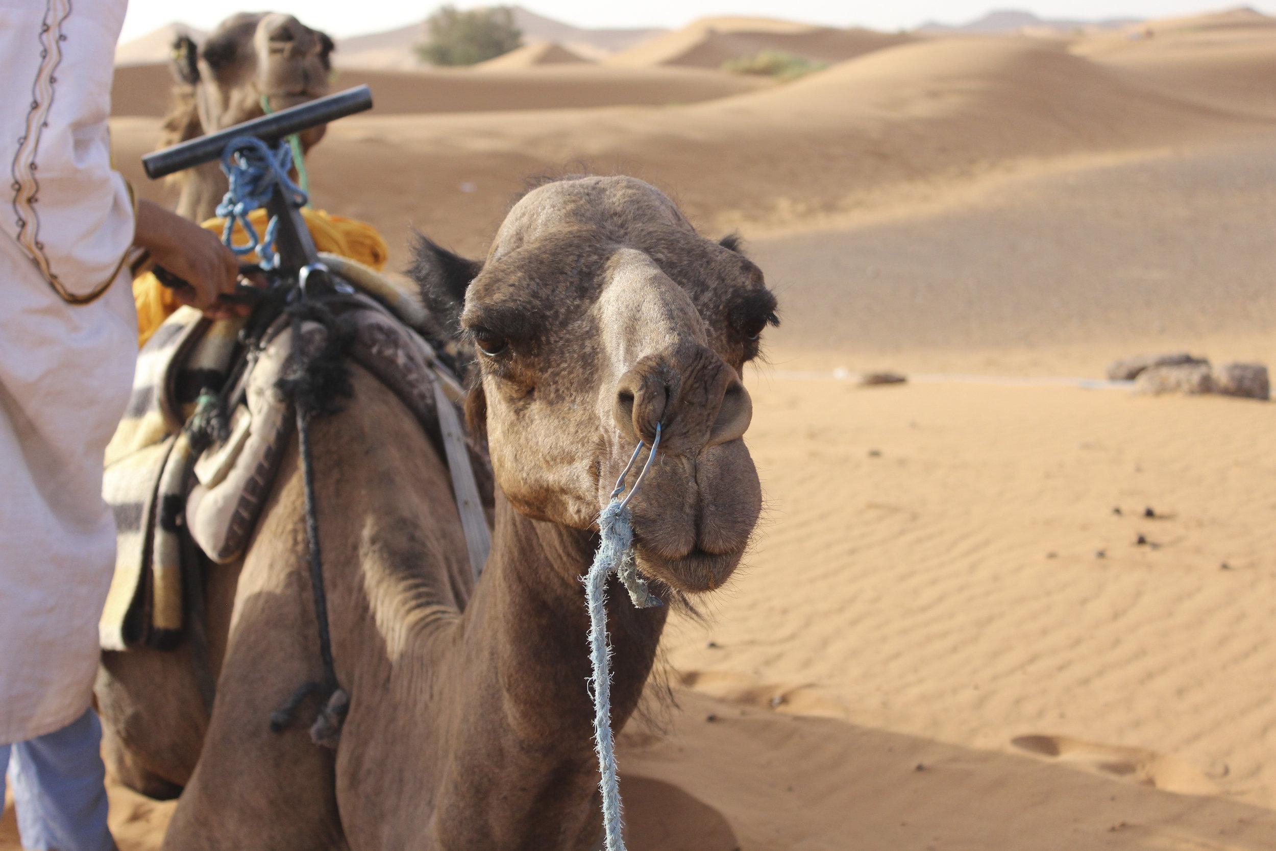 Morocco-14.jpg