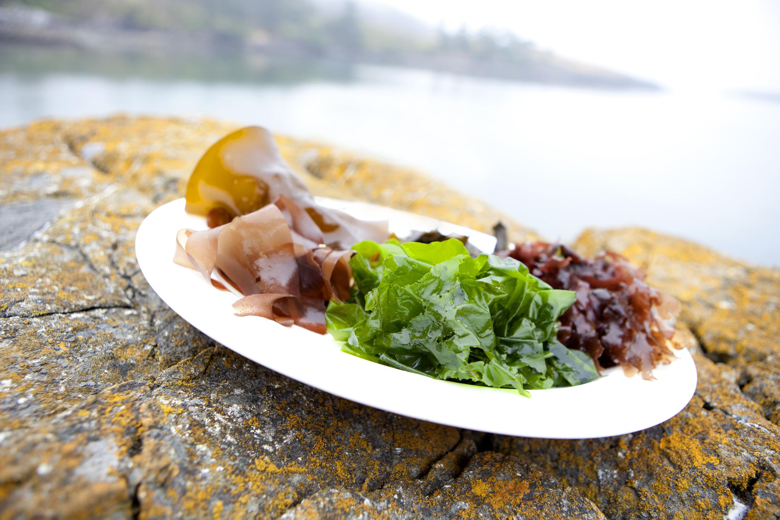 seaweed5.jpg