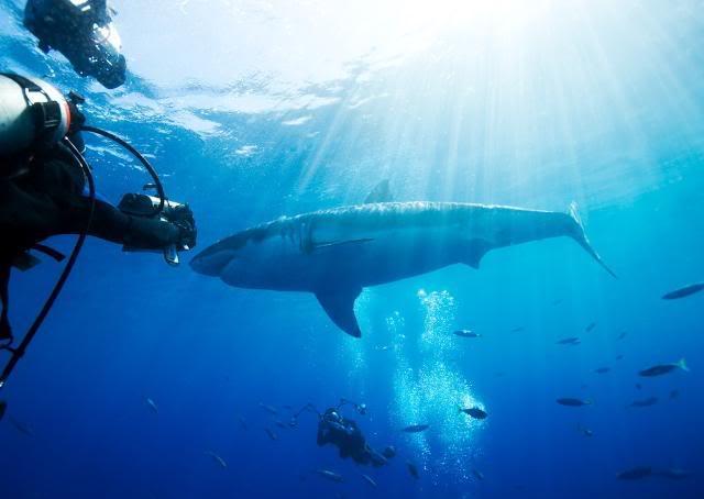 sharklight.jpg