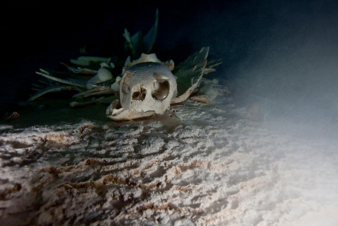 A turtleskull.jpeg