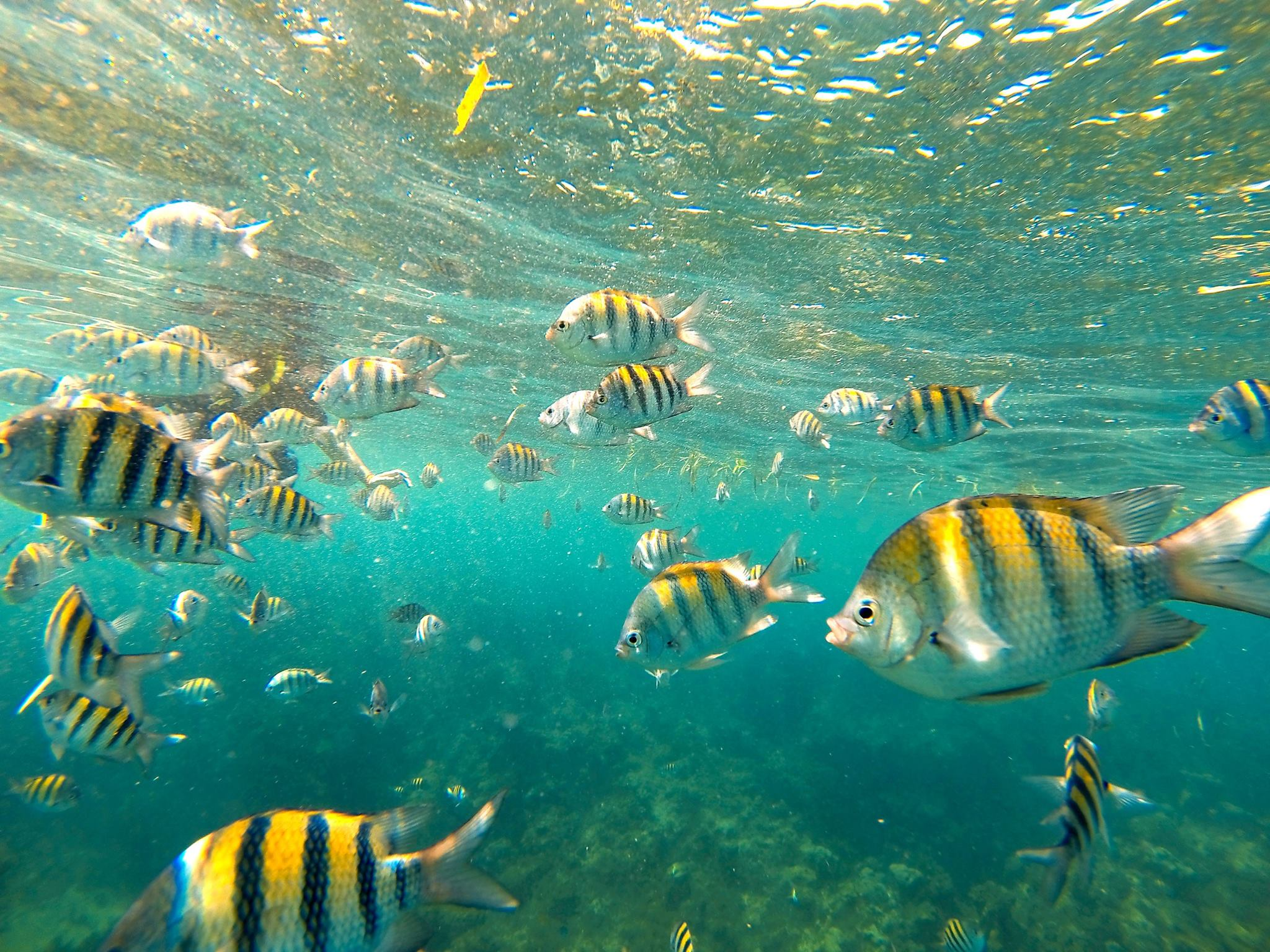 We swam with ALL the fishes. Snorkelling in Montego Bay, Jamaica. (Photo by Dylan).