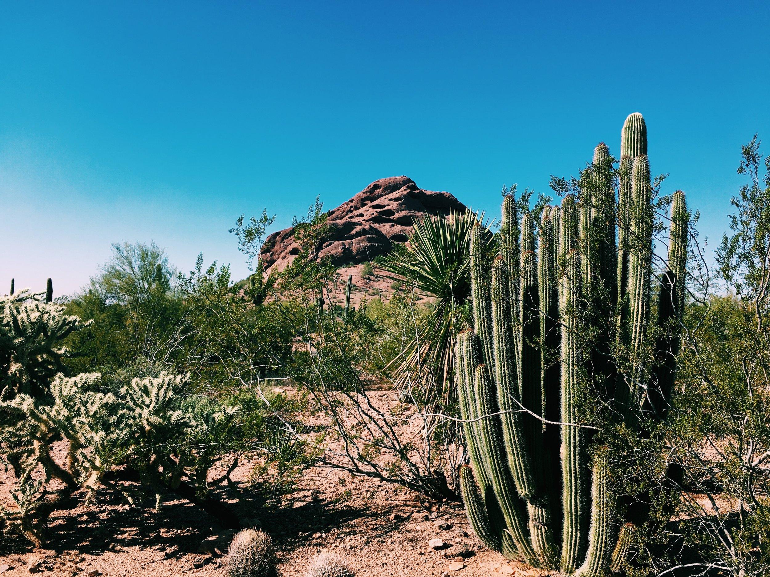 Desert Botanical Garden, Phoenix, Ariz.