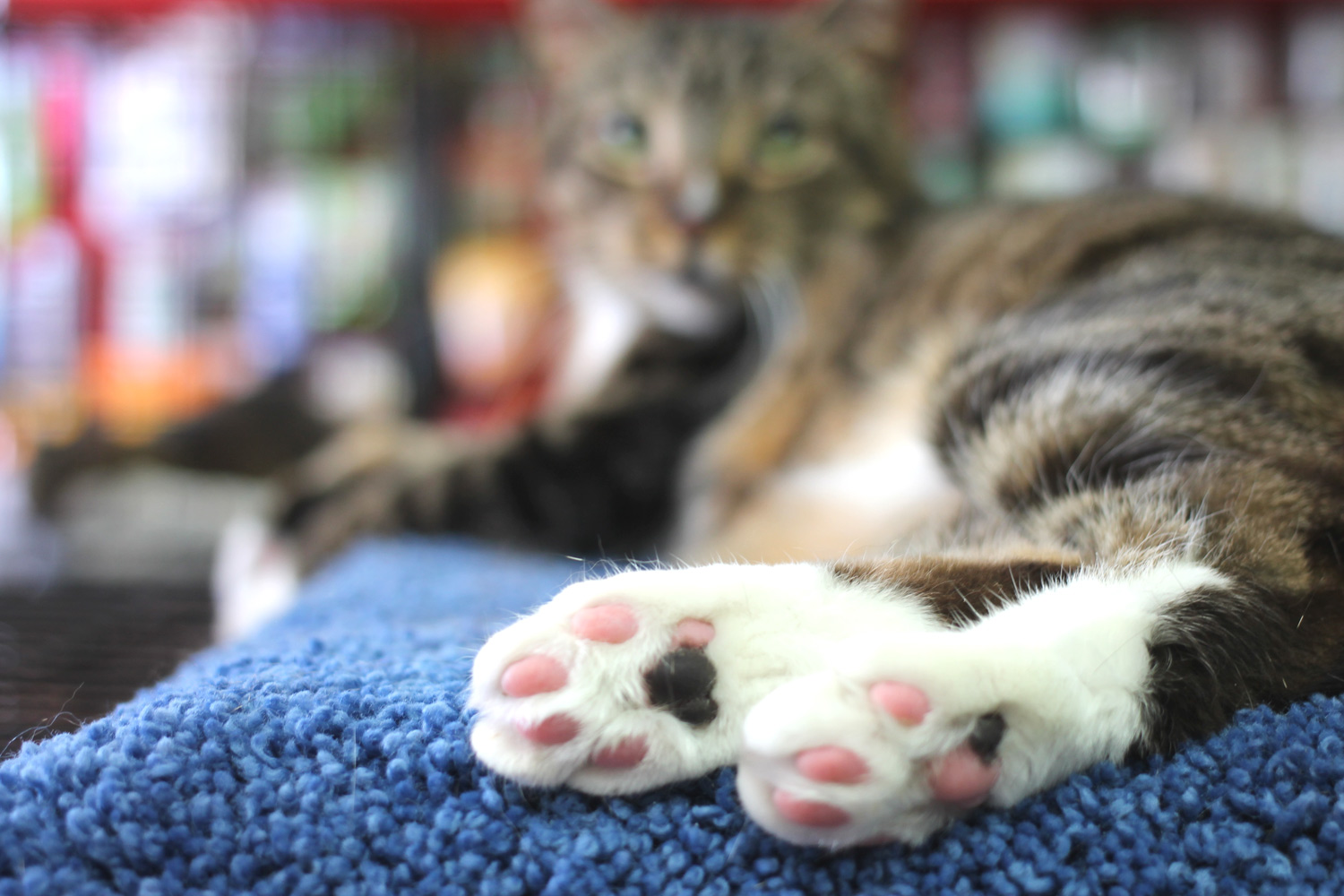 And of course we finish with the obligatory kitten toes pic!