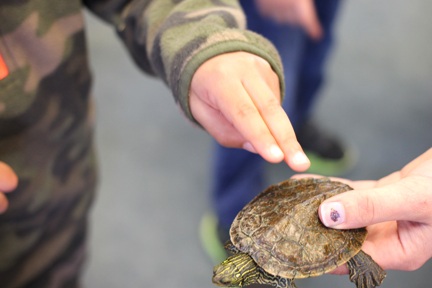 Teaching the children about the shell. Did you know a turtle can feel when you touch their shell? Their shell's carapace actually grows from their skeletal structure so they are able to detect sensations similar to a bird's beak or your fingernail.