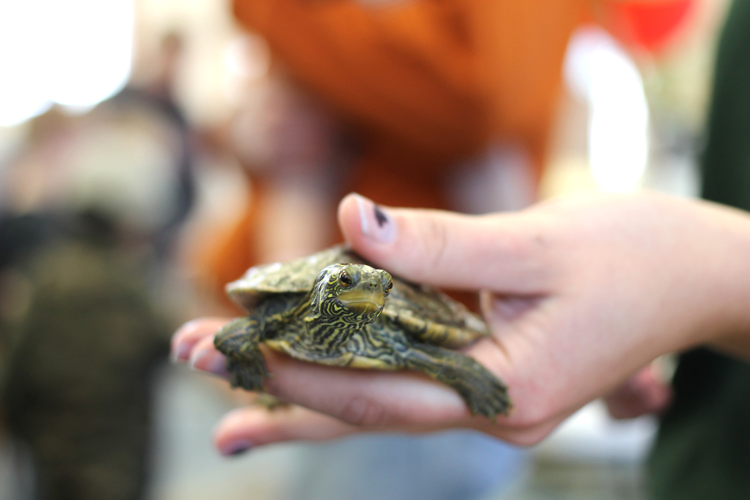 Here is a student showing a yellow-bellied turtle.