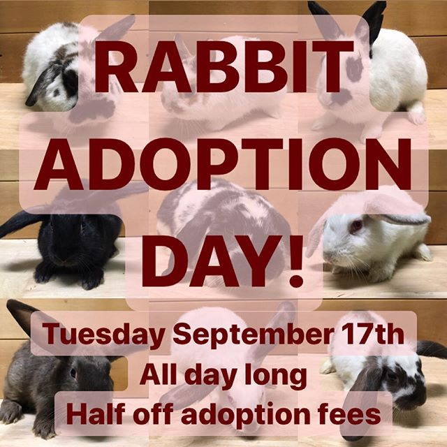 RABBIT ADOPTION DAY!! We've recently taken in A LOT of rabbits who are now all ready for adoption! To help them find their new homes we are offering half off of all their adoption fees this Tuesday September 17th. Rabbits will NOT be adopted out on a first come-first serve basis, as we strive to send them home with the ideal family for each individual rabbit. If you are interested in a particular rabbit, please reach out to us ahead of time so we can get to know you and give you the best experience on Tuesday when you come to get to know the rabbit in turn.  Is a rabbit the right pet for you? Here are some of their basic requirements: Rabbits are daily maintenance pets. They eat a diet of hay, pelleted food, and veggies and must be fed at least twice per day.  Rabbits (especially young ones) are energetic and curious, and need the opportunity to explore and exercise every day to live a healthy life.  Rabbits love and need human contact. It's important that you spend time with your bunny as they will become lonely without affection.  All of our rabbits are indoor pets. We do not adopt rabbits to anyone who plans to keep them outside or in a garage.  Rabbits will need their cages cleaned AT LEAST once a week. Rabbits hate to be dirty and it's just plain unhealthy for them to be living in a filthy cage. However, you never need to bathe your rabbit - they groom themselves just like cats do.  Rabbits have a lifespan of 8 to 10 years and some live to be in their teens! It's a commitment.  If you have any questions about rabbit care please reach out to us! All of our rabbits are rescues and fosters with their own unique backstories and we are so excited for the opportunity to find them all new homes and loving families! #adoptdontshop  See you on Tuesday!!