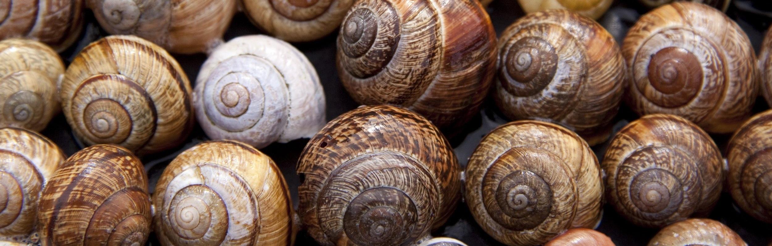 snail+shells.jpg