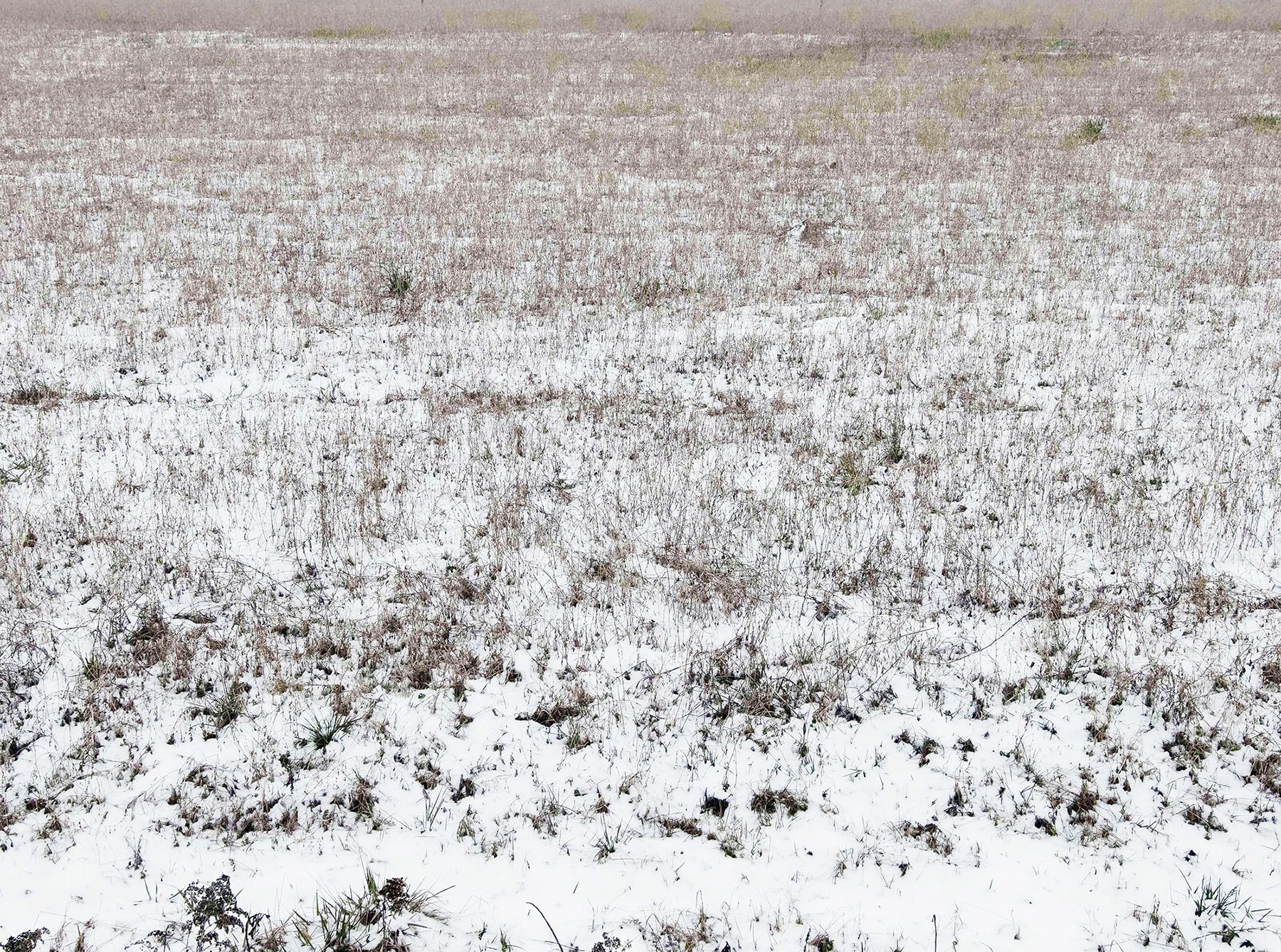 AR_SNOW--101.jpg