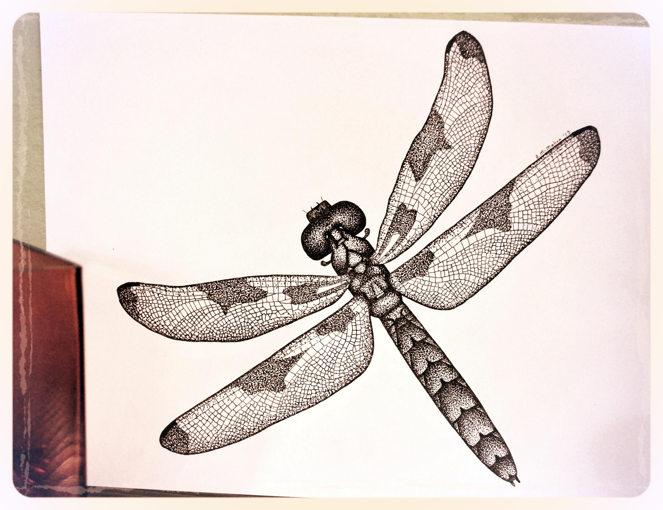 Common Whitetail Dragonfly (Female) - Libellula lydia