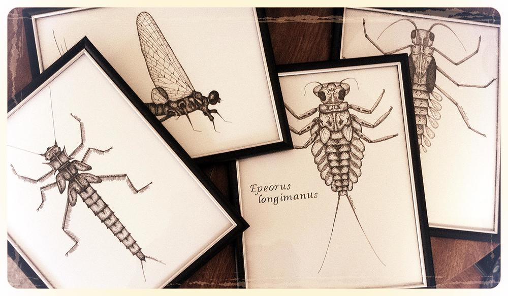 Detailed black and white prints and originals of aquatic insect fly fishing art and other nature designs.