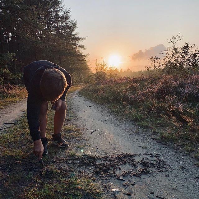 ❤️ golden hour #denmark #nature #goldenhour #vildmarksoplevelser