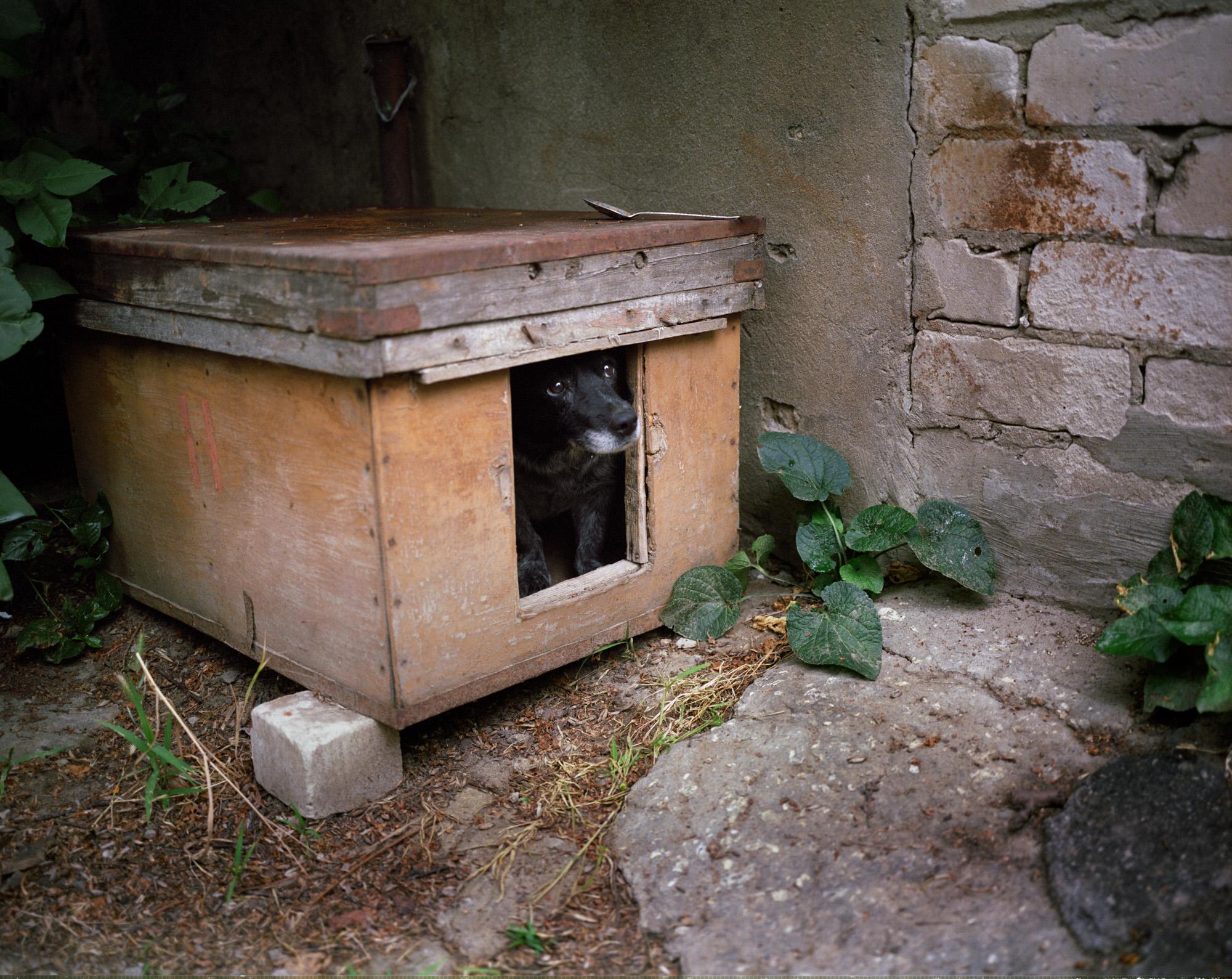 Gosia, the timid guard dog