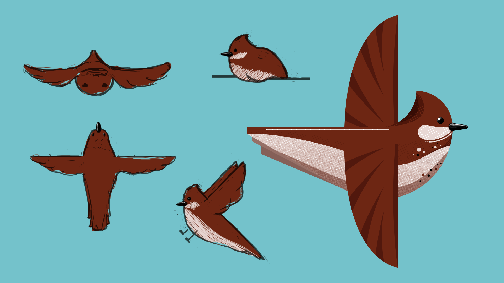 Bird sketches and design, by Tyler