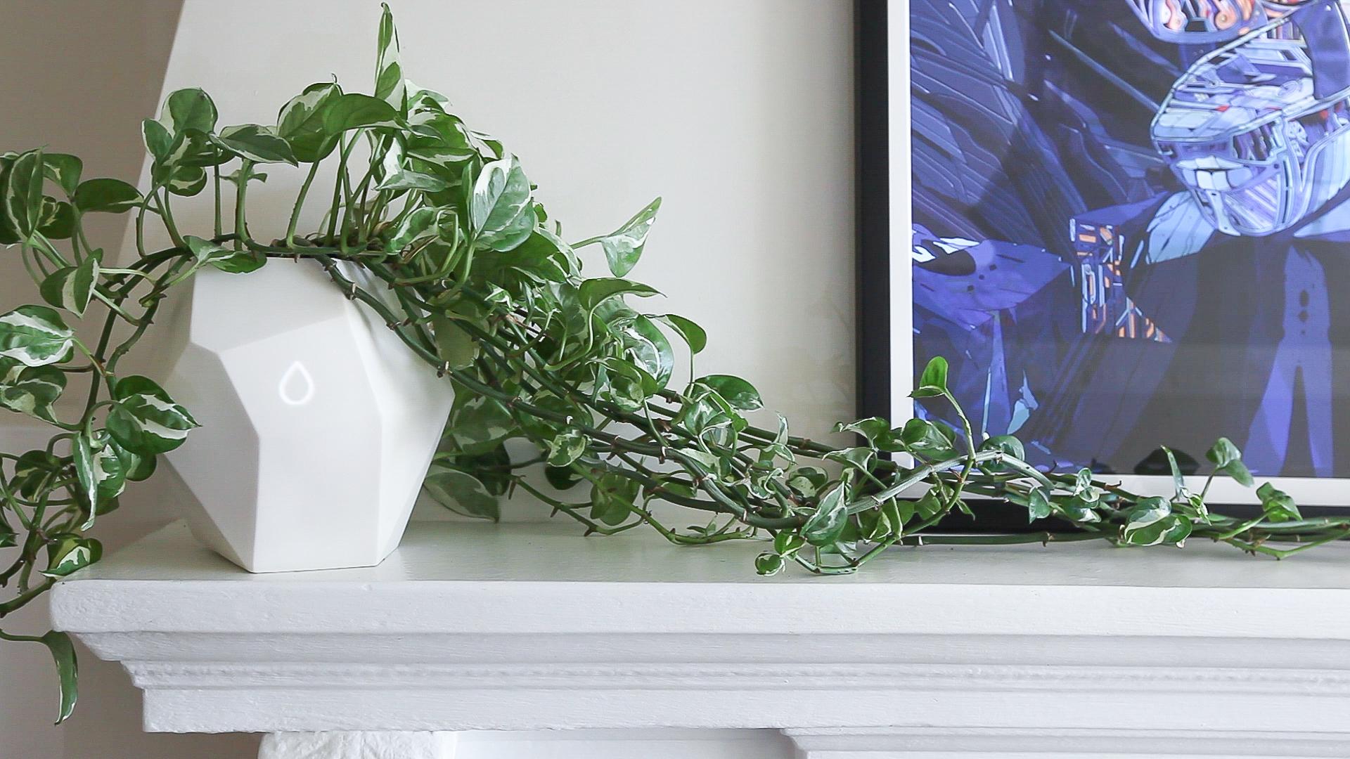 planter2.jpg