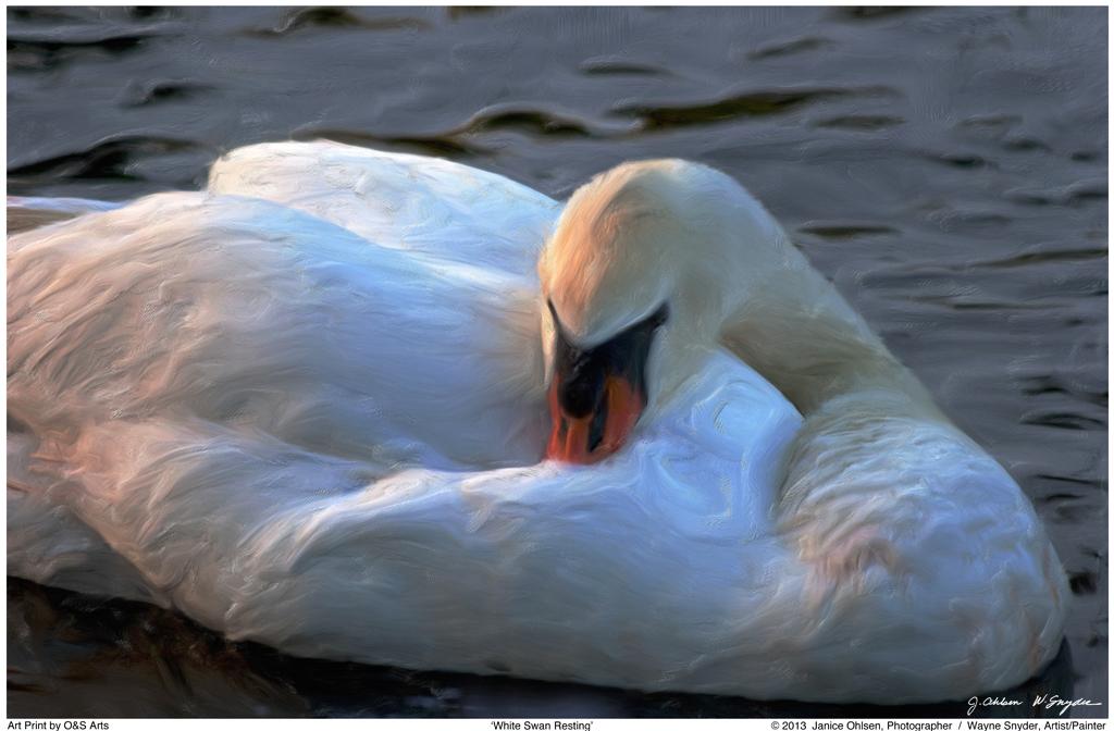 Swan1Finishweb1024.jpg