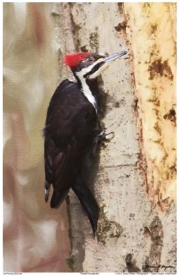 WoodpeckerTest2Text1024.jpg