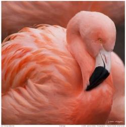Flamingo3A1024 copy.jpg