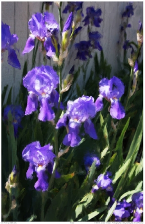 Iris5MergedText1024.jpg