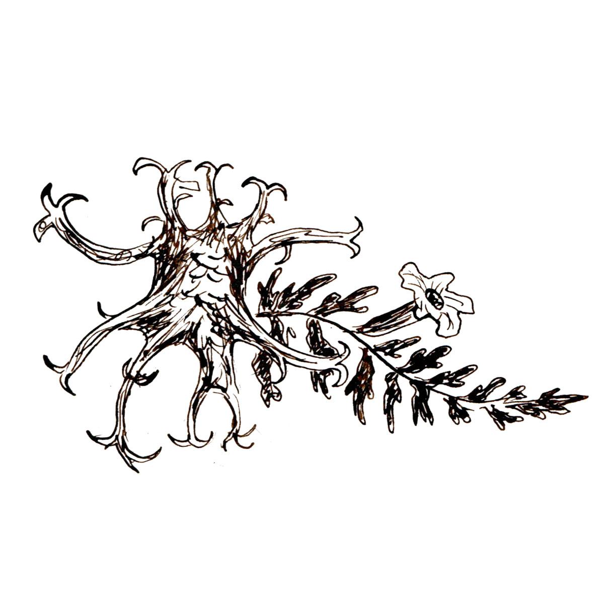Herboriste-DevilsClaw.jpg